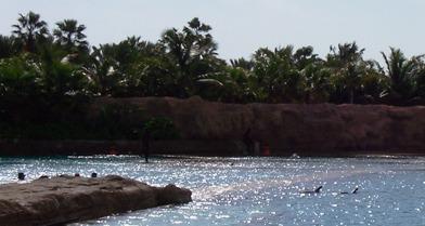 Dolphin Cay Atlantis