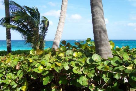 Bahamas island paradise