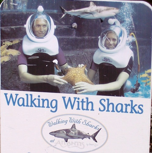 Walking With Sharks