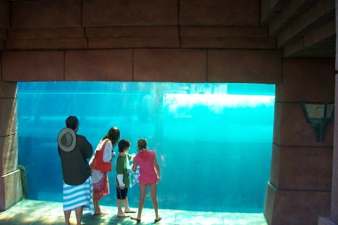 Atlantis Shark Tank